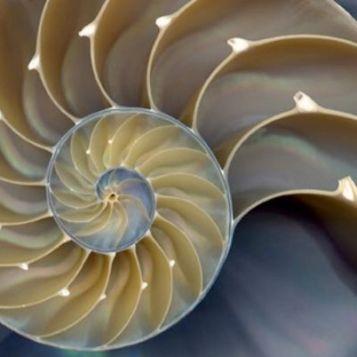 shell_p